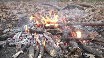 Close up of campfire video