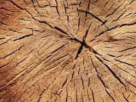 Cross section of the tree. Close-up wooden cut texture. photo