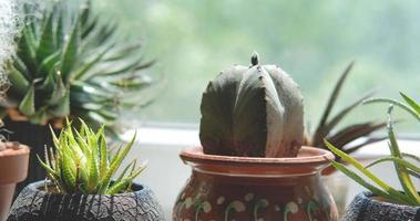 Close up of cactus near window video