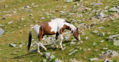cavalos nas montanhas video