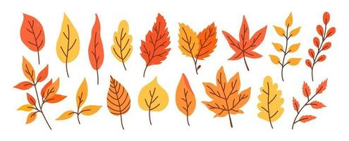 Set of different autumn leaves and twigs vector