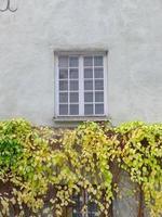 Botanic garden house plant vine leaf in Latvia old town photo