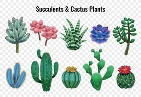 Succulent Cactus Plants Set vector