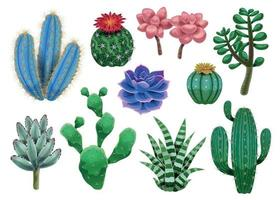 Cactus Plant Icons Collection vector