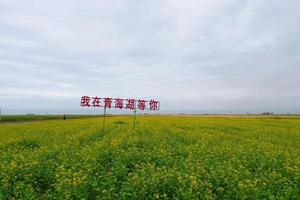 Rape flower field and cloudy sky in Qinghai Province China photo