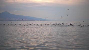Seabirds Collectively Fishing on the Ocean Shore video