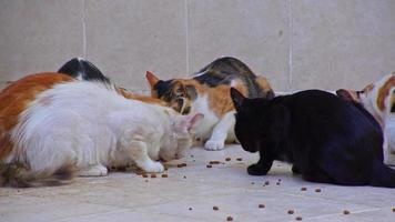 Stray Cats Eating Food on Concrete Floor video