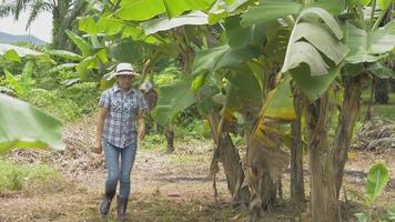 Female farmer in straw hat caring banana tree in the organic garden. video