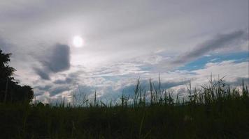 rizières vertes en saison des pluies et ciel bleu video