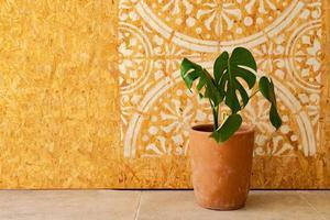Planta de interior en una maceta con imagen de mandala en la pared de madera foto