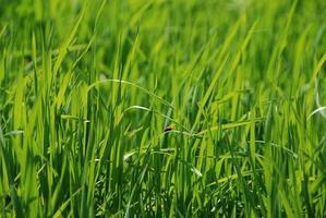 hierba verde iluminada por el sol foto