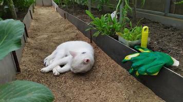 gato blanco duerme en un invernadero foto