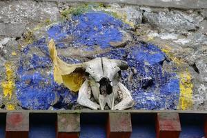 cráneo de cabeza de animal en el templo budista tibetano, laji shan qinghai china foto