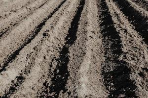 hileras de surcos en campo orgánico preparado para plantar papas a mano. foto