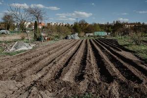 Hileras de surcos en campo orgánico preparado para plantar patatas manualmente foto