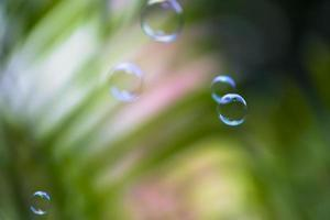 Water bubbles floating and falling on green leaves photo