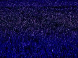 textura de plantas azules foto