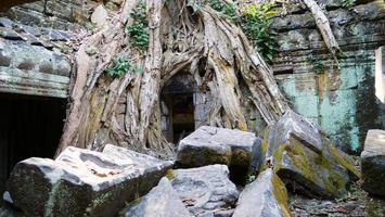 stone ruin and tree root at Ta Prohm Temple, Siem Reap Cambodia. photo