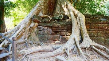 raíz de árbol y pared de roca de piedra en el templo de ta prohm siem reap foto