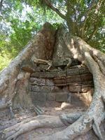 raíz de árbol y pared de roca de piedra en el templo de ta prohm, siem reap, camboya. foto