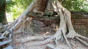 Tree root and stone rock wall at Ta Prohm Temple, Siem Reap Cambodia. photo