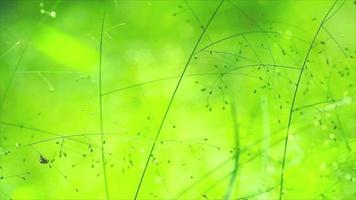 blur green little flower of grass in the garden flutter in the wind video