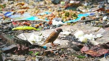 pássaros comem restos de comida deixados por humanos, árvores florestais são reduzidas video