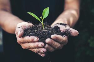 dos manos de los hombres sostenían la plántula para plantar. foto