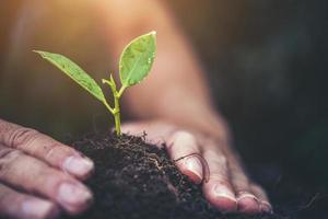 dos manos sosteniendo y cuidando una planta verde joven con luz solar cálida foto