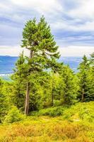 Forest panorama spruce fir trees Brocken mountain peak Harz Germany photo