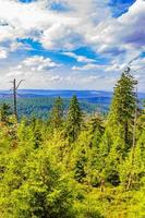 Forest dead fir trees at Brocken mountain peak Harz Germany photo