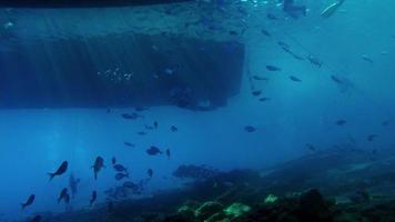 School of fish and beams of light under a boat with two divers video