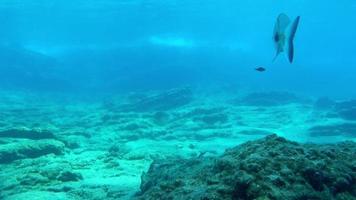 cardume de peixes e mergulhadores na superfície video