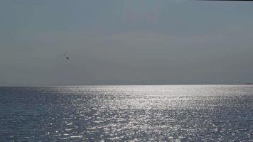 seule mouette volant sur le ciel bleu brillant de l'océan video