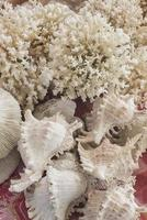 white coral and seashells souvenirs in market photo