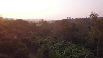 volo aereo attraverso video da un drone in una foresta pluviale in thailandia.