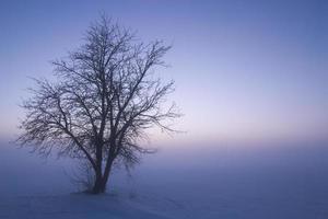 árbol solitario en el fondo de la densa niebla. color natural de la puesta de sol. foto
