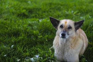 lindo perro sentado sobre la hierba verde foto