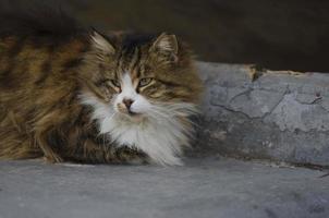 gatos lindos gratis que viven en la calle foto