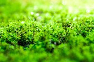 Frescura musgo verde que crece en el suelo con gotas de agua en la luz del sol foto