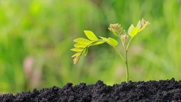 de petits arbres poussent dans un sol fertile. video