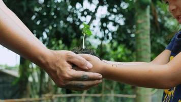 enfant et mère tenant une plante verte dans les mains. notion d'écologie. video
