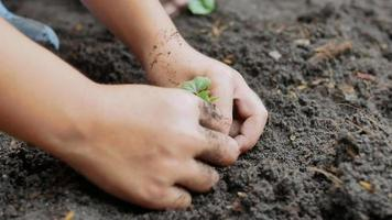 gros plan d'une main d'enfant plantant un semis dans l'arrière-cour. video