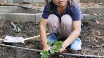 mignonne petite fille en bottes plantant un semis dans l'arrière-cour. video