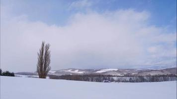 Tree and Branch stand with snow in winter video