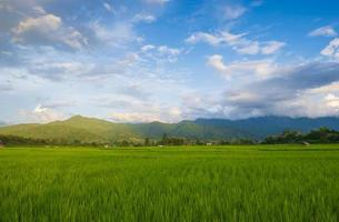 Green fields in the rainy season and blue sky photo