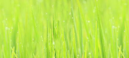 Desenfoque abstracto verde natural para el fondo foto