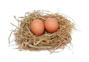 Chicken eggs in the nest isolated on a white background photo