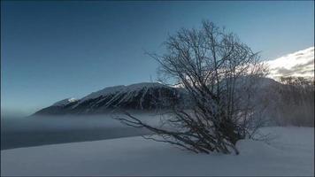 Tree ice mountain in fog video