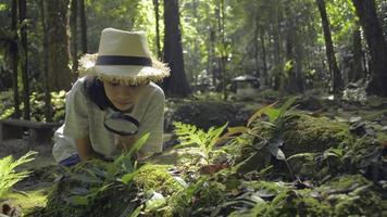 garota usando a lupa para ver as plantas verdes e os insetos na floresta. video